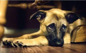 las-6-cosas-que-destruyen-el-espiritu-de-tu-perro